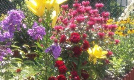 """Już w ten weekend """"Jarmark Kwiatowy"""" i """"Kwiaty Ogrodów"""""""