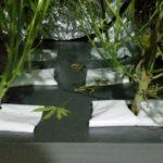 Kołaczków: Konopie uprawiał w szafie