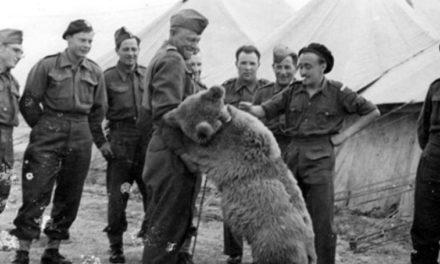 Czy pamiętacie niedźwiedzia Wojtka spod Monte Cassino?