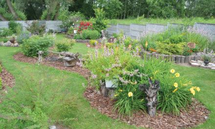 Wybiorą najpiękniejsze ogródki i balkony