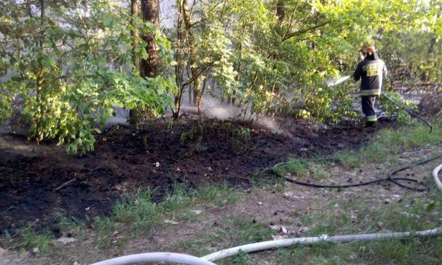 Płonęła ściółka leśna w gminie Sońsk