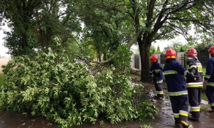 Zalane ulice, połamane drzewa – bilans niedzielnej nawałnicy