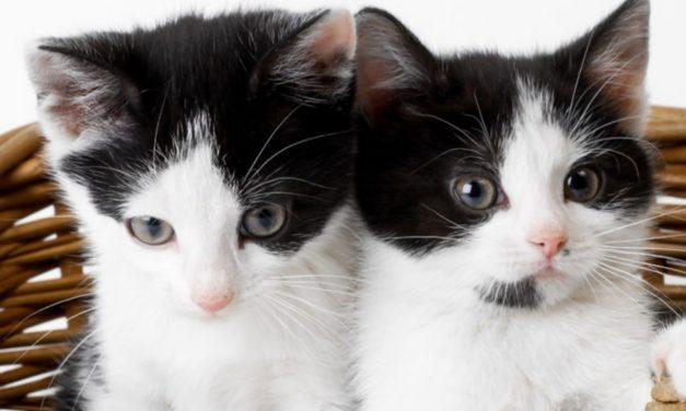 """W maju otwarcie Powiatowego Ośrodka Felinoterapii """"Radosny Kot"""""""