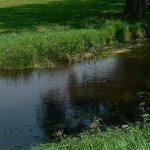 Ciechanów: Zwłoki w rzece
