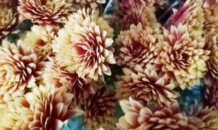 Miasta wesprze handlarzy kwiatów i zniczy