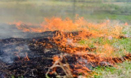 Rolniku! Wypalanie traw grozi utratą dopłat