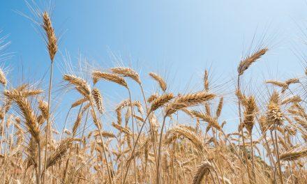 Wyróżnienia dla rolników z powiatu ciechanowskiego