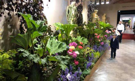 Szkółka z Pęchcina  partnerem Królewskiej Wystawy Kwiatów